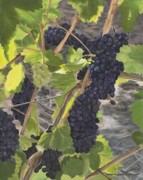 Pinot Originals - The Vineyard by Sandi Ballard