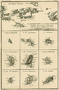 Border Drawings Prints - The Virgin Islands Print by Guillaume Raynal 
