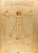 Vitruvius Drawings Posters - The Vitruvian Man Poster by