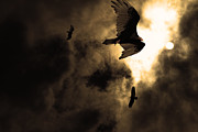 Flying Turkey Prints - The Vultures Have Gathered In My Dreams . Version 2 . Golden Print by Wingsdomain Art and Photography