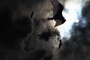Bird In Flight Prints - The Vultures Have Gathered In My Dreams . Version 2 Print by Wingsdomain Art and Photography