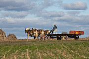 Horse And Wagon Photos - The Wagon by David Arment