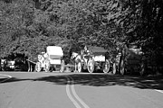 Horse And Buggy Posters - THE WAIT in BLACK AND WHITE Poster by Rob Hans