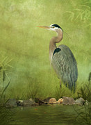 Herons Metal Prints - The Wait Metal Print by Reflective Moments  Photography and Digital Art Images