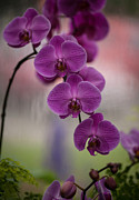 Orchid Prints - The Waiting Print by Mike Reid