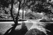 Garden Flowers Photo Originals - The Walkway Bw by Lawrence Christopher