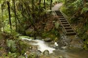 Water And Plants Art - The Walkway On The Waiomu Track by Bill Hatcher