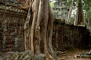 Travel Photography Prints - The Wall At Ta Prohm Print by Bob Christopher