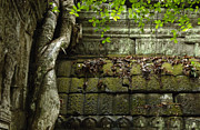 Travel Photography Prints - The Wall Ta Prohm 2 Print by Bob Christopher