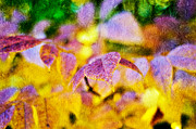 Park Scene Mixed Media Metal Prints - The Warmth of Autumn Glow Abstract Metal Print by Andee Photography