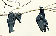 Crows Paintings - The Warning by Ben Watson III