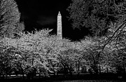 Washington Monument Framed Prints - The Washington Monument at Night Framed Print by Lois Bryan