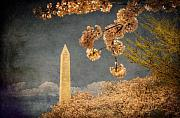 Cherry Blossoms Digital Art Posters - The Washington Monument Poster by Lois Bryan
