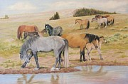 Wild Horses Drawings Originals - The Water Hole by Barbara Anne Ramsey