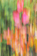Abstract Impressionism Photo Prints - The Watercolor garden Print by Aimelle