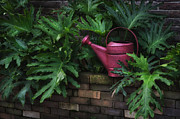 Bryant Photo Posters - The Watering Can Poster by Brenda Bryant