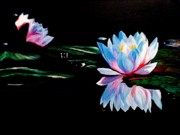 Anke Wheeler Paintings - The Waterlily Pond by Anke Wheeler