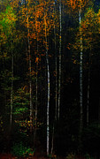 Forest Light Photos - The Way to Glow from the Darkness by Jenny Rainbow