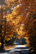 Autumn Landscape Prints - The Way to Happiness Print by Kristin Kreet