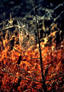 Emily Stauring - The Web
