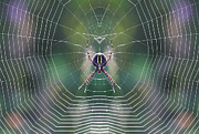 Symetrical Posters - The web maker Poster by Mircea Costina Photography