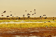 Top-end Prints - The Wetlands Print by Douglas Barnard