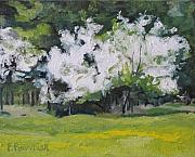 Francois Fournier Paintings - The White Apple Tree Quebec Canada by Francois Fournier