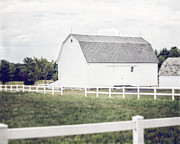 White Barn Prints - The White Barn Print by Lisa Russo