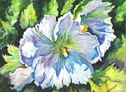 Tropics Drawings - The White Hibiscus in Early Morning Light by Carol Wisniewski