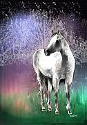 White Stallion Posters - The White Horse Poster by Arline Wagner