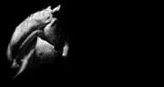 The White Stallion Print by Sue Fulton