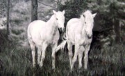 Wild Horses Drawings Originals - The White Stallions by Mickey Raina