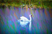 Swans... Digital Art Prints - The White Swan Print by Bill Cannon