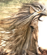 Gypsy Vanner Digital Art - The Wild Side by Ryan Courson