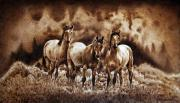 Wild Horses Pyrography - The Wild Trio - on paper by Dino Muradian