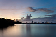 Miami Skyline Metal Prints - The Wilder Side of Miami Metal Print by Matt Tilghman