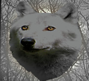 Wolves In Nature Prints - The Wilds Of Nature Print by Debra     Vatalaro