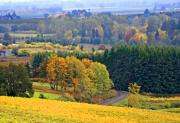 Fall Colors Digital Art Prints - The Willamette Valley Print by Margaret Hood