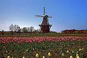 Dutch Mixed Media Framed Prints - The windmill poster Framed Print by Robert Pearson