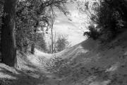 Black And White Landscape Photograph Posters - The Windy Path Poster by Cathy  Beharriell