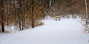 Nature Scene Originals - The Winter Bench by Chad Davis