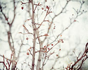 Pear Tree Posters - The Winter Pear Poster by Lisa Russo