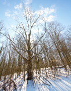 Snowed Trees Photos - The Winter Woods by Tim  Fitzwater