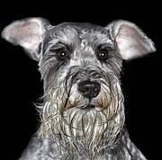 Schnauzers Posters - The Wise One Poster by KH Lee