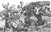 Man And Woman Drawings - The Witness Trees by Dawn Senior-Trask