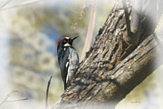 Woodpeckers Photos - The Woodpecker by Ernie Echols