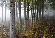 Fog Photo Prints - The Woods Print by Rebecca Cozart