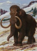 National Geographic Society Art Prints - The Woolly Mammoth Is A Close Relative Print by Charles R. Knight