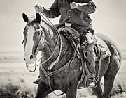 Western Photos - The Working Ranch Horse by Megan Chambers
