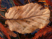 Autumn Leaf Photos - The World Keeps Changing by Juergen Roth
